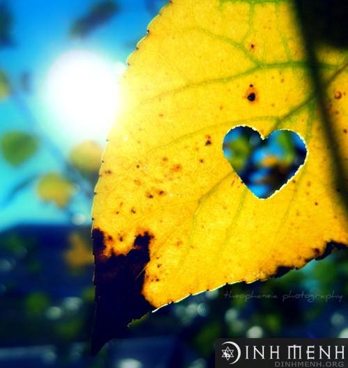 Cung thiên bình và tình yêu