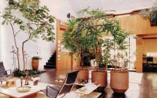 Cách đặt cây xanh trong phòng khách hợp phong thủy