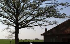 Cách hóa giải cho nhà có cây to án ngữ mặt tiền