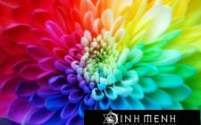Chọn lựa màu sắc trong trang trí nhà cửa
