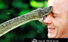 Giải mã các bí ẩn giấc mơ thấy bị con rắn cắn