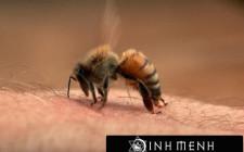 Giải mã các bí ẩn giấc mơ thấy bị ong chích