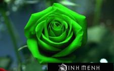 Giải mã các bí ẩn giấc mơ thấy cánh hoa hồng