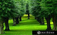 Giải mã các bí ẩn giấc mơ thấy cây cối