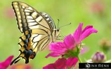 Giải mã các bí ẩn giấc mơ thấy con bướm