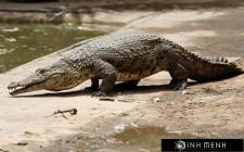 Giải mã các bí ẩn giấc mơ thấy con cá sấu