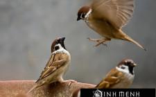 Giải mã các bí ẩn giấc mơ thấy con chim sẻ