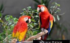 Giải mã các bí ẩn giấc mơ thấy con chim vẹt
