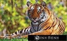 Giải mã các bí ẩn giấc mơ thấy con hổ