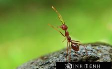 Giải mã các bí ẩn giấc mơ thấy con kiến