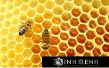 Giải mã các bí ẩn giấc mơ thấy con ong