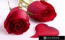 Giải mã các bí ẩn giấc mơ thấy đóa hoa hồng