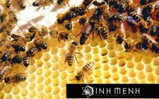 Giải mã các bí ẩn giấc mơ thấy gặp tổ ong