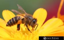 Giải mã các bí ẩn giấc mơ thấy hình ảnh con ong