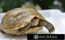Giải mã các bí ẩn giấc mơ thấy hình ảnh con rùa