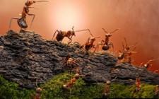 Giải mã các bí ẩn giấc mơ thấy một đàn kiến