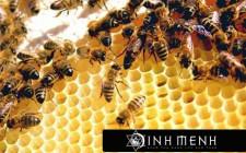 Giải mã các bí ẩn giấc mơ thấy một tổ ong