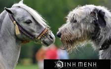 Giải mã các bí ẩn giấc mơ thấy ngựa và chó