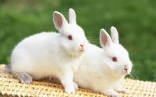Giải mã các bí ẩn giấc mơ thấy những con thỏ