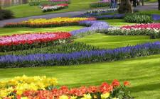 Giải mã các bí ẩn giấc mơ thấy vườn hoa bãi cỏ