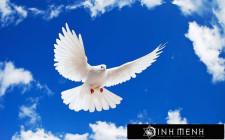 Giải mộng giấc mơ nhìn thấy chim bồ câu