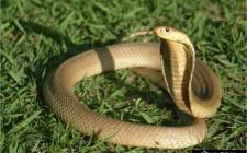 Giải mộng giấc mơ nhìn thấy rắn
