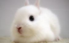 Giải mộng giấc mơ nhìn thấy thỏ