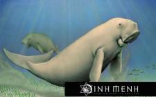 Khám phá ý nghĩa giấc mơ thấy Bò Biển - ngủ nằm mơ thấy Lợn biển