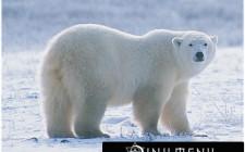 Khám phá ý nghĩa giấc mơ thấy Con Gấu - ngủ nằm mơ bị gấu cắn
