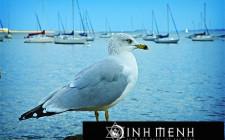 Khám phá ý nghĩa giấc mơ thấy Hải âu - ngủ nằm mơ thấy Mòng biển