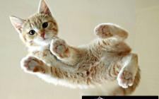 Khám phá ý nghĩa giấc mơ thấy Mèo - ngủ nằm mơ bị mèo cắn
