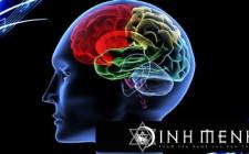 Khám phá ý nghĩa giấc mơ thấy Não - ngủ nằm mơ thấy bộ Óc não