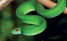 Khám phá ý nghĩa giấc mơ thấy rắn - nằm ngủ mơ thấy rắn độc