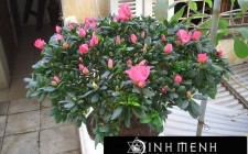 Những loại cây phù hợp để trồng ở ban công