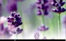 Những loại hoa giúp bạn thư giãn