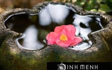 Nước – Biểu tượng của sự thịnh vượng cho ngôi nhà