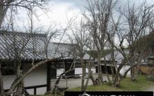 Phong thủy cho cây khô trong vườn nhà