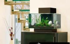 Phong thủy đặt bể cá trong nhà ở
