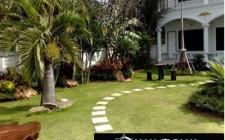 Phong thủy khuyên không nên lát đá cả sân vườn