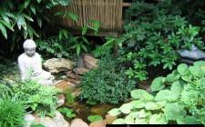 Trong nhà nên bố trí thêm cây và nước
