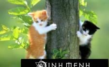 Xác định hướng nuôi cho mèo