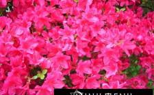 Bài trí hoa ở ban công thu hút vượng khí