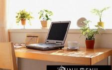 Chọn loại cây xanh đem lại tài lộc cho văn phòng