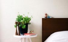 Có nên mang cây xanh vào phòng ngủ ?