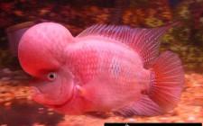 khoa học phong thủy cần biết khi nuôi cá cảnh