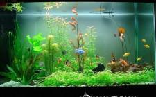 khoa học phong thủy cho bể cá trong nhà