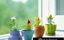 Nguyên tắc chọn màu sắc nhà cửa theo ngũ hành