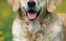 Việc nuôi chó theo khoa học phong thủy