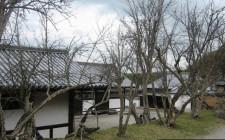 Cây khô gần nhà dẫn đến lụi bại