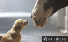Chân bị tật với giấc mơ thấy chó và ngựa